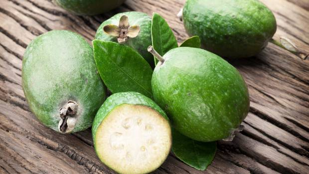 Feijoa, New Zealand
