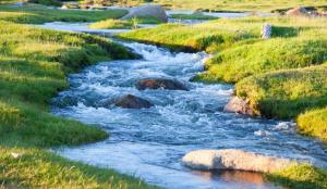 Stream Water